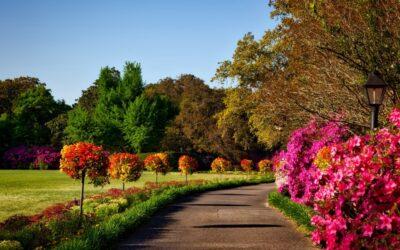Il giardiniere del mondo:  Pratiche filosofiche e  creative nel giardino. Diana Marcheschi.
